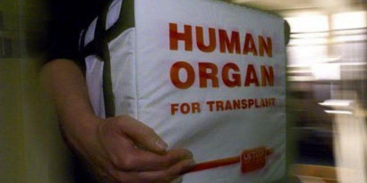 anthropina-organa