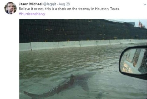 houston-shark-1
