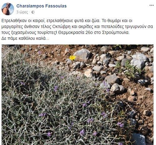 fasoylas