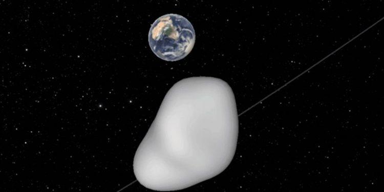 asteroeidid