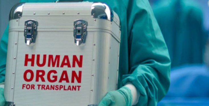 dorea-organon