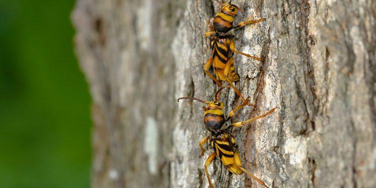 entomo-moyria