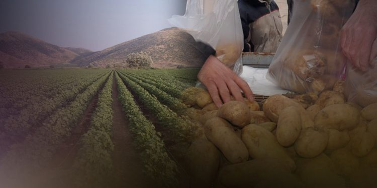 patates-kalliergeia
