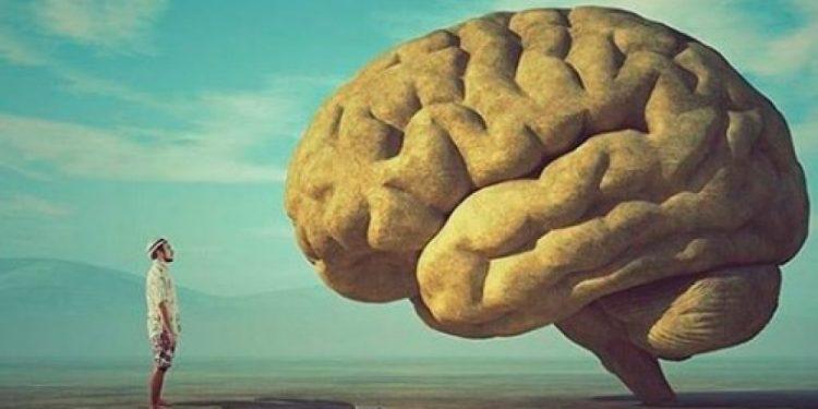 brain_eu_photo_untitled