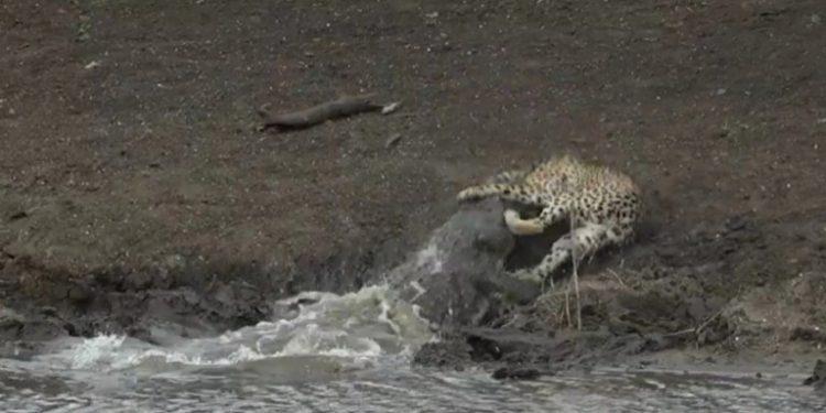 krokodeilos-tsitax-afriki-25-12-20