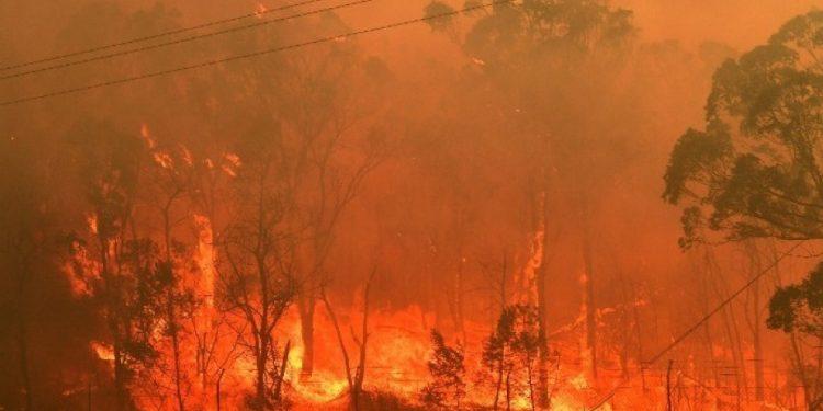 ape-wildfires-1