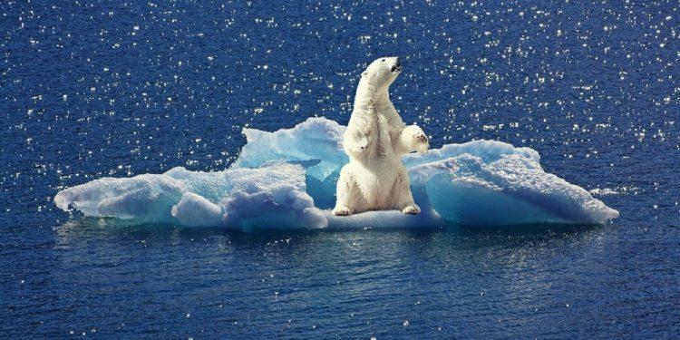polar-bear-2199534_1280-1024x682